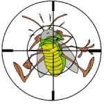 Thumbnail image for A Brief Guide To Pest Control
